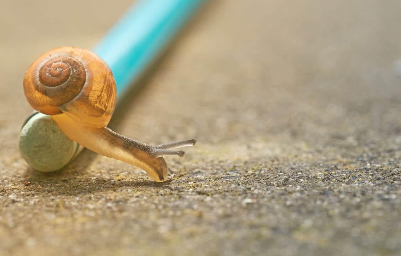 Escargot sur craçon à papîer Excel très lent